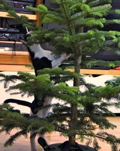 Ein toller Katzenbaum
