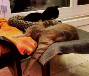 Update aus dem neuen Zuhause von Caruso (Rambo)