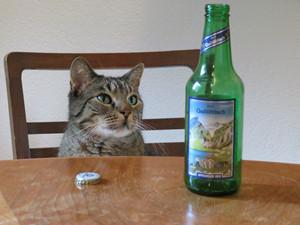Bier für die Katz'?