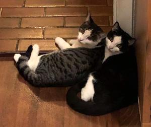 Besuch bei Jimmy (Theo) und Leo (Alvin)