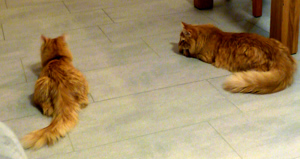Besuch bei Nala (Hertaz) und Django (Elliot)
