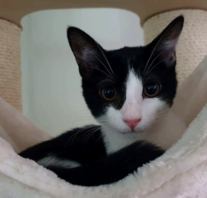 News aus dem neuen Daheim von Ona's Kitten