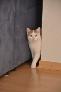 Besuch bei Felina (Happy)