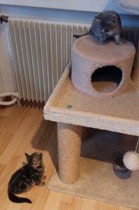 Zuwachs bei Gretli's Kitten