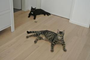 Besuch bei Amelie (Midnight) und Lou (Stormy)