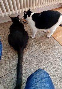 Besuch bei Lulu (Lanea) & Mizzi (Mahina)