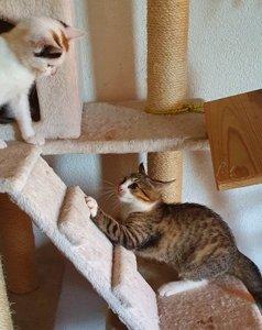 Putzmuntere Kätzchen