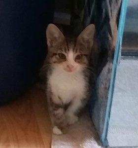 Bei Gretli's Kitten ist immer etwas los….