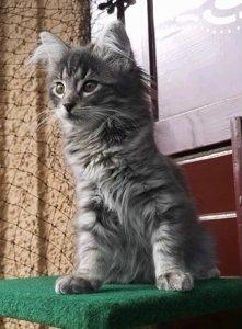 News aus den neuen Zuhause von Molly's Kitten