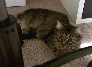 Molly's erste Woche ohne Kitten